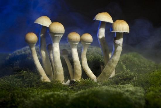 迷幻蘑菇食用指南