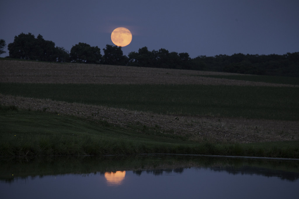 Strawberry Moon on Pond