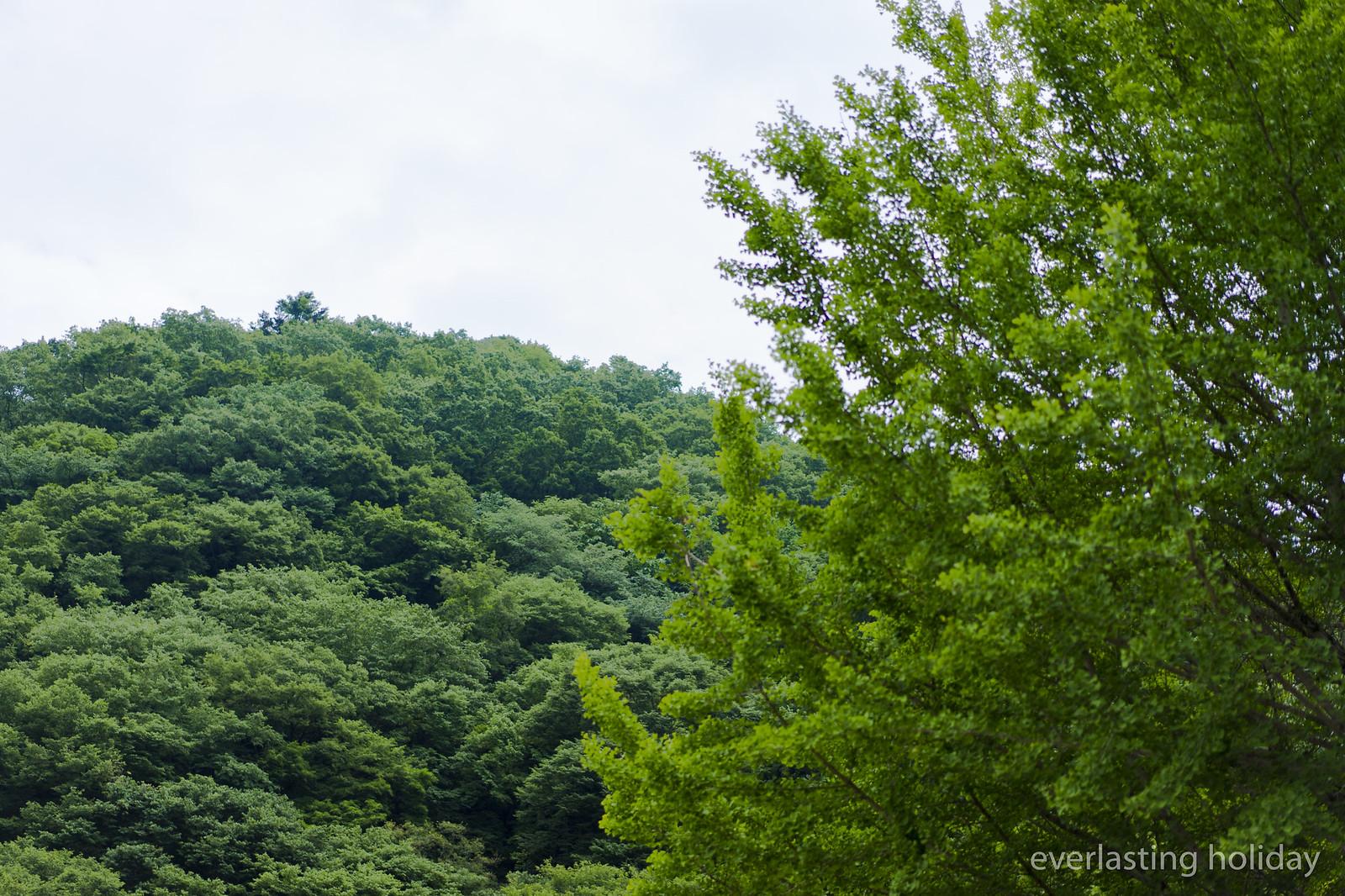 高尾山 Mount Takao-0002