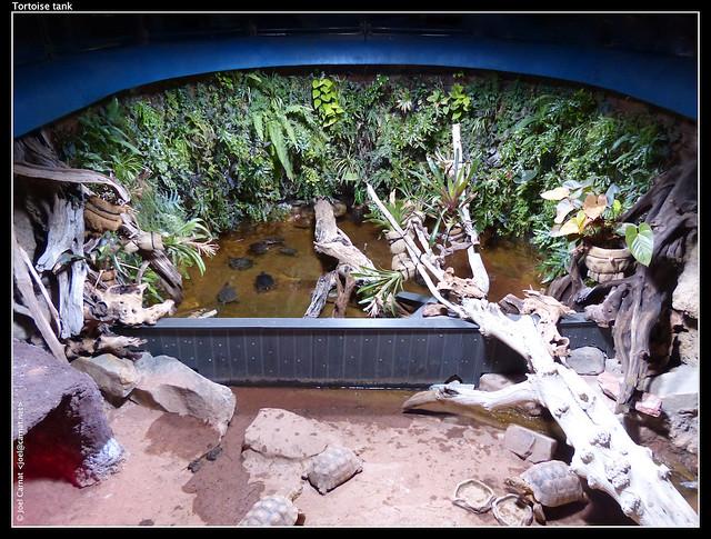 Tortoise tank Geochelone sulcata: African spurred tortoise ...