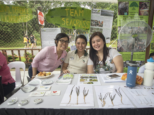 Learn about seagrasses with TeamSeaGrass at Pesta Ubin 2016