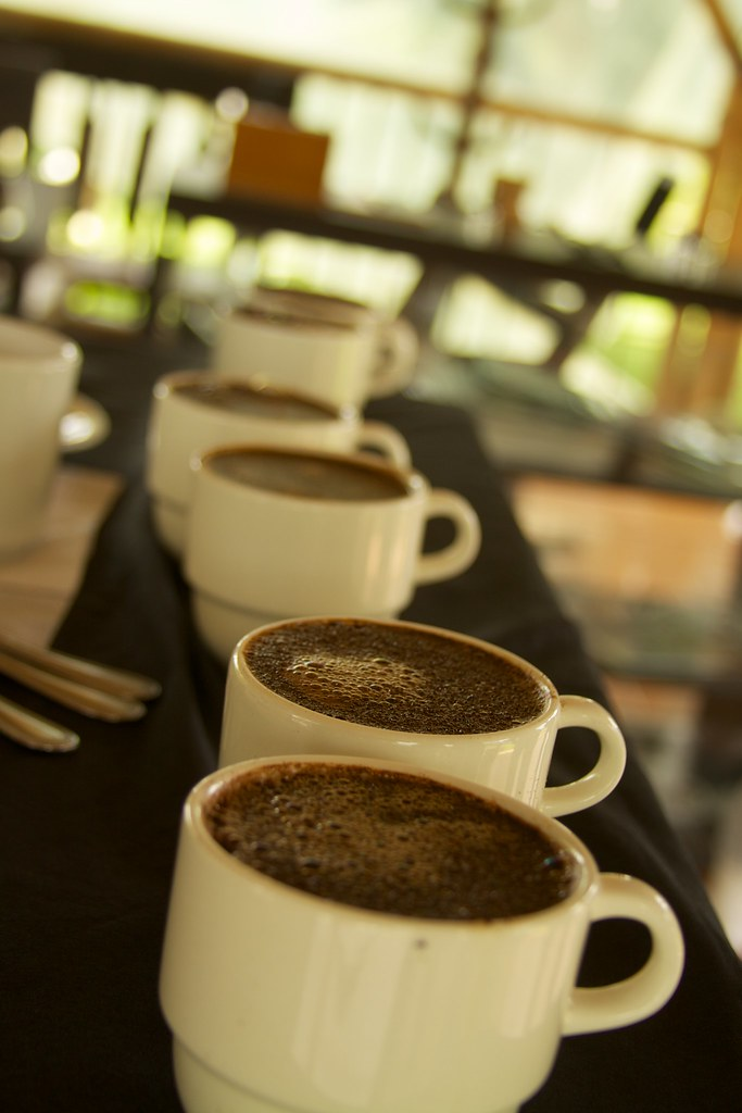 Best Coffee Triangle Nc