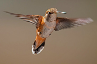 Allen's Hummer (explored) | by jimages Images