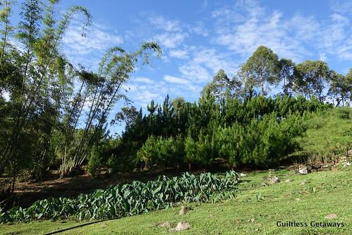 bukidnon-farm.jpg