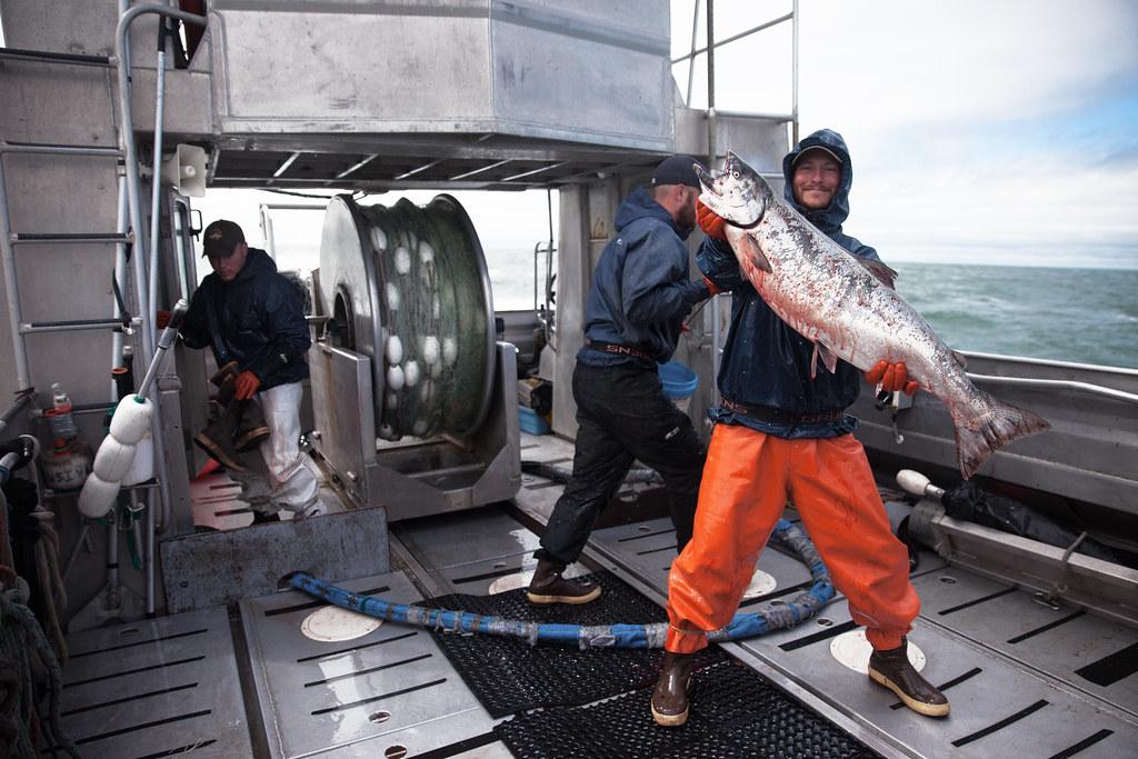 'King Salmon', United States, Alaska, Naknek, Bristol Bay ...
