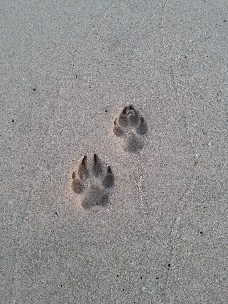 Big Dog Tracks