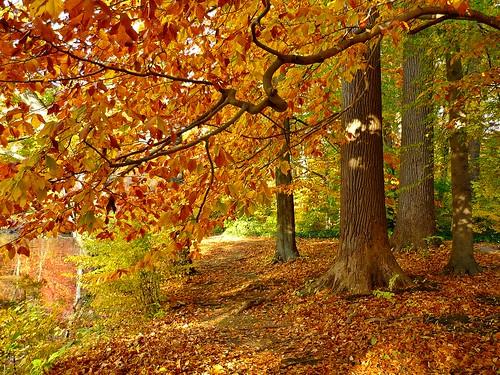 Bailey Arboretum Long Island