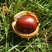 A nut of a horse-chestnut.