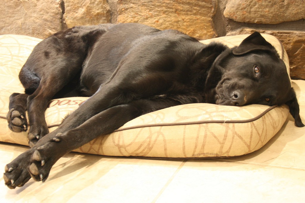 Mammoth Dog Bed Replacement Covers