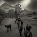 goat trails...