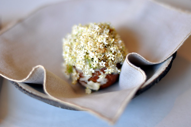 Restaurant Noma: Æbleskive med hyldeblomster