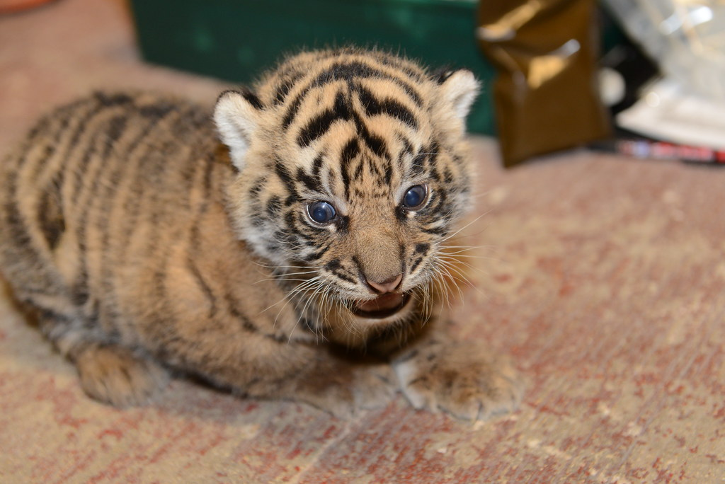 Image Result For Cubs Who Care