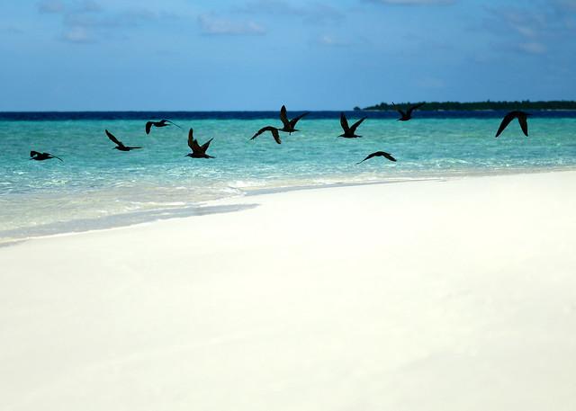 Pájaros negros volando sobre la orilla de nuestra isla, los únicos habitantes de Odagalla