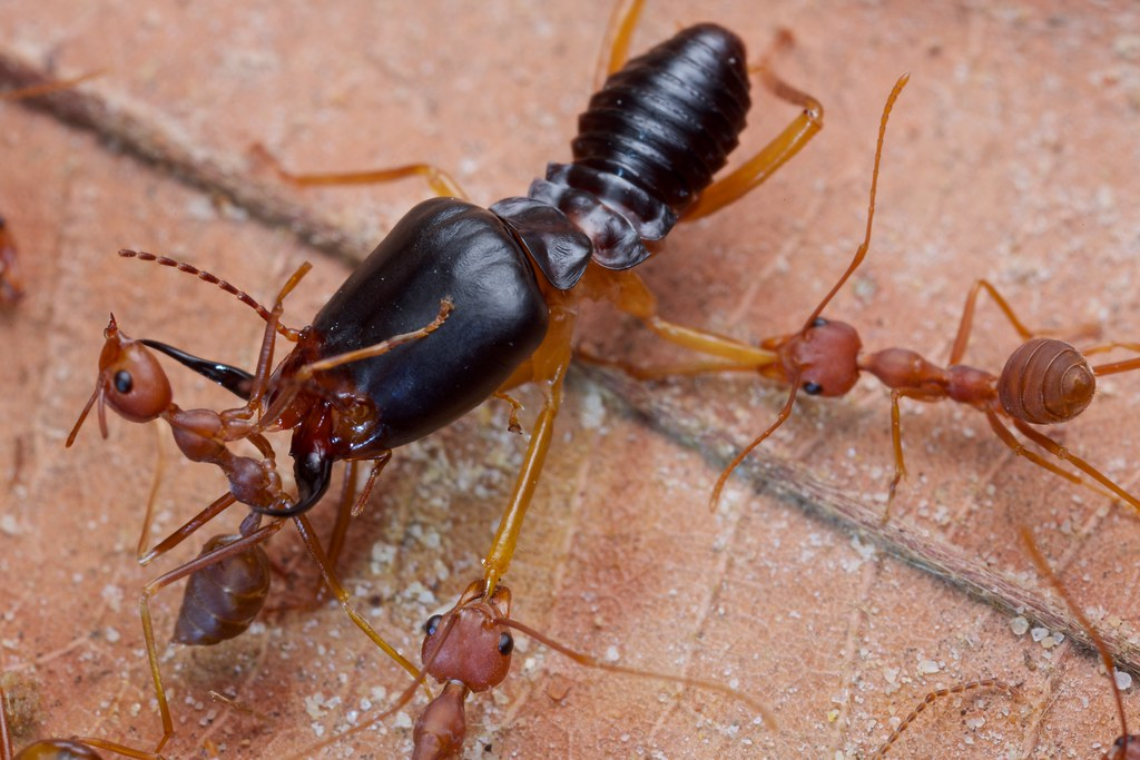 Ant vs. termite (2) | For stories and more info on the ...