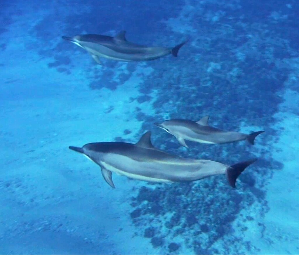 Swimming With Dolphins Near Marco Island Florida