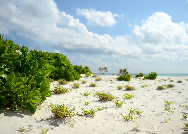 La poca vegetación que encontré en la isla de Odagalla