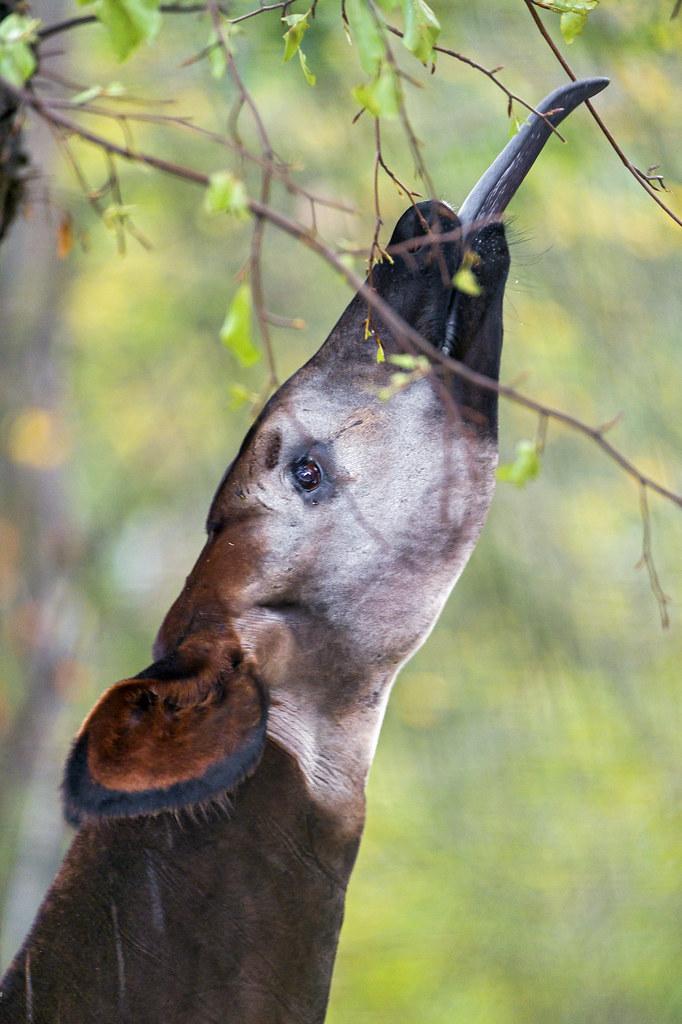 ALL  Animal List A to Z  Garst Wildlife Photos