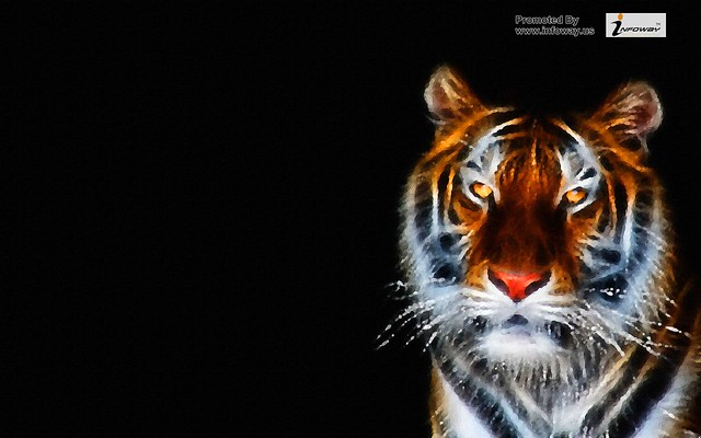 Black Tiger HD Wallpaper WidescreenBlack Tiger Wallpaper Widescreen