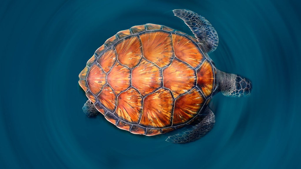 _A_green_sea_turtle_shows_off_its_shell____Sergi_Garcia_Fe ... Sea Turtle Shell