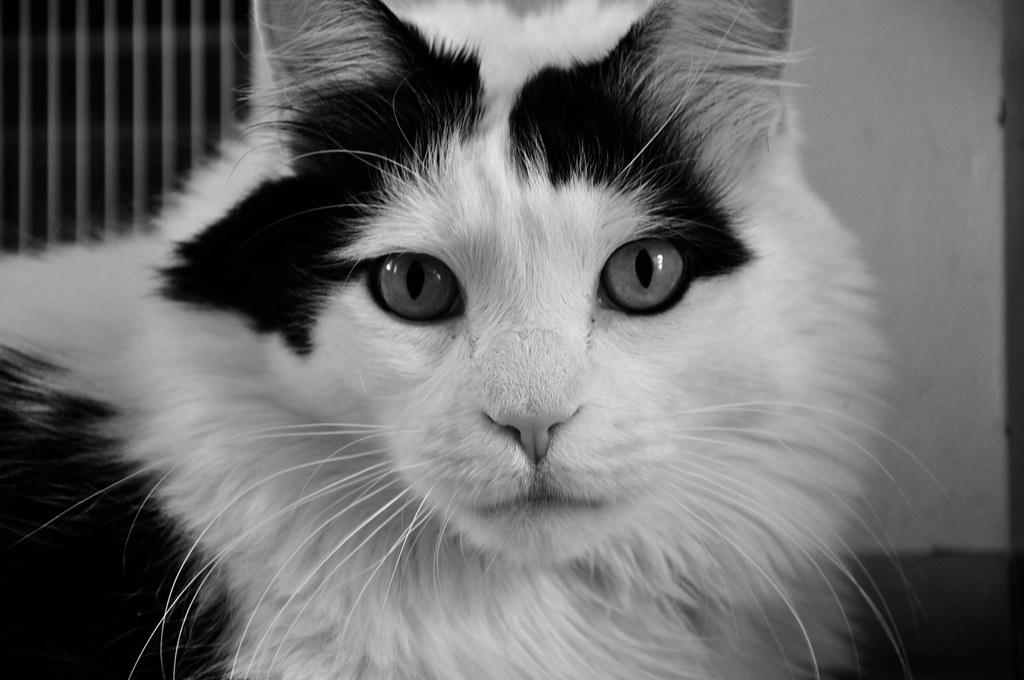 Black Cat Beauty Dee Why Grand