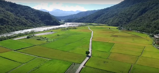 南安稻田。圖片來源:慈心基金會提供
