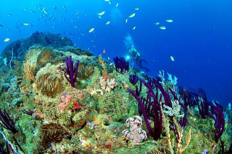 望海巷內灣地形複雜,海流較強,不適合潛水初學者,也因此保留良好的珊瑚礁生態。圖片來源:活塞教練。