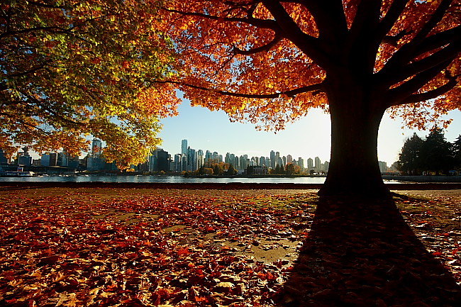 Fall color-Vancouver