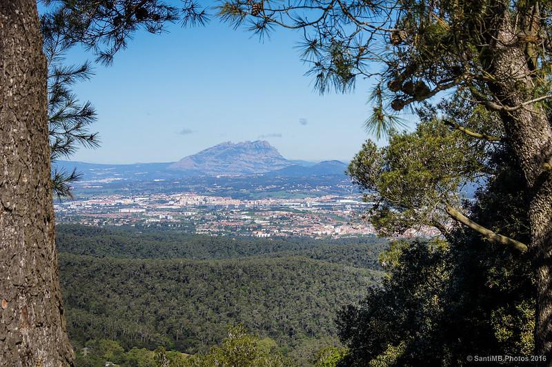 Montserrat entre los árboles
