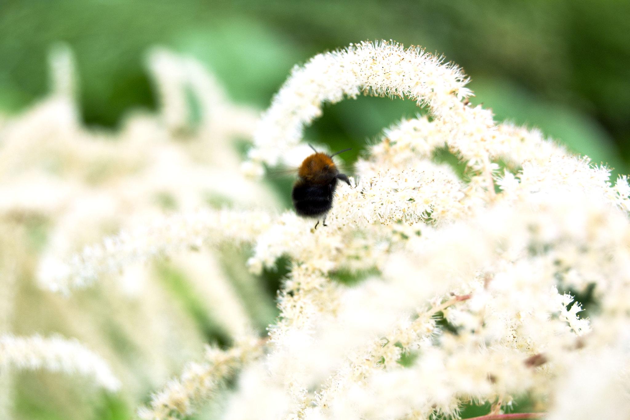 flowerbumblebee2