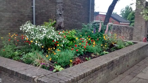 Whickham Library Garden June 16 (1)