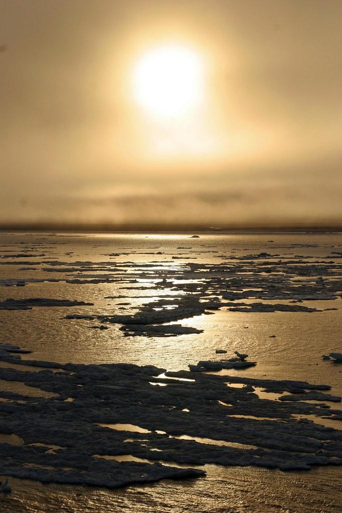 wrangel island ice field