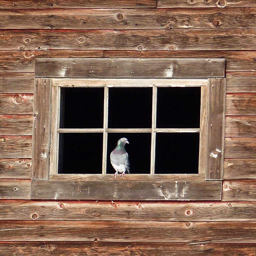 A face at the window, but not an owl this time : )