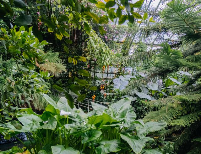 roath park conservatory