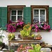 Flowery windows. Blumen Fenstern. (Sils)