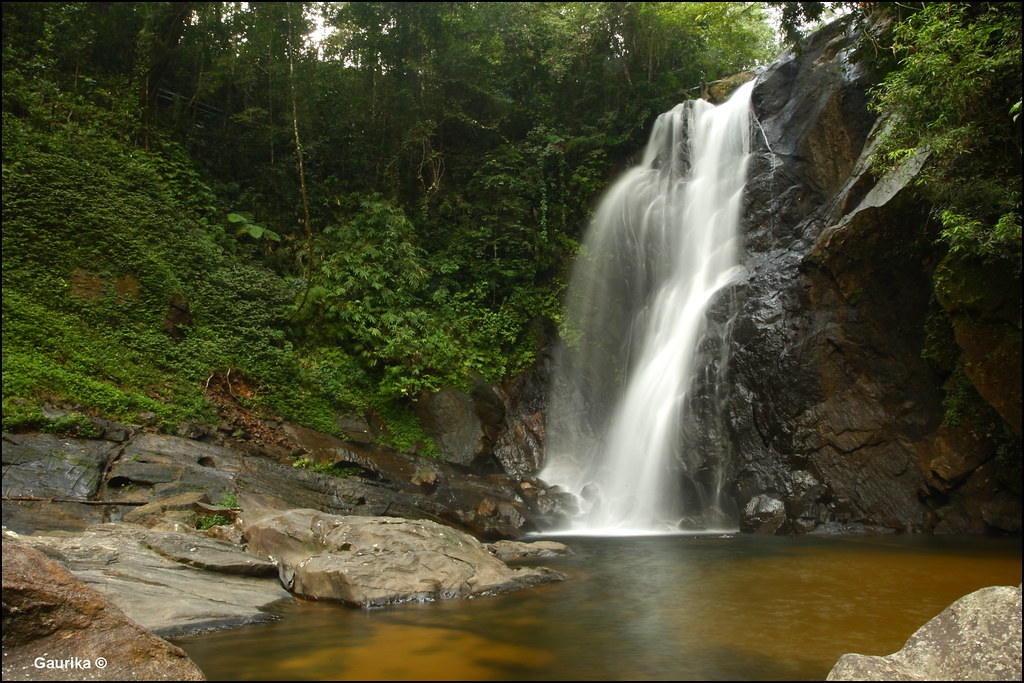 a night i spend in the sinharaja forest Book your tickets online for sinharaja forest reserve, galle: see 457 reviews, articles, and 739 photos of sinharaja forest reserve, ranked no6 on tripadvisor among 67 attractions in galle.