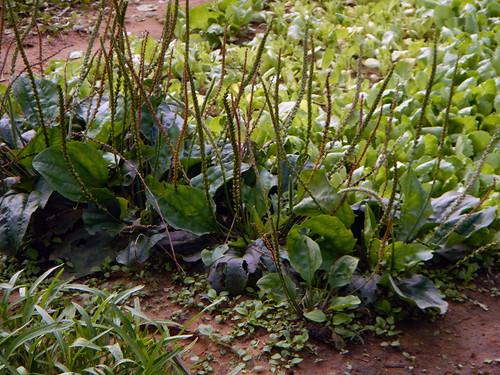 Herb Garden in Hoi An, Vietnam