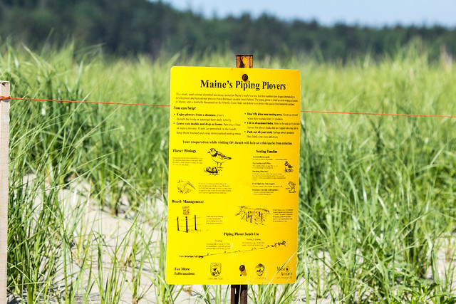 Piping Plover habitat sign