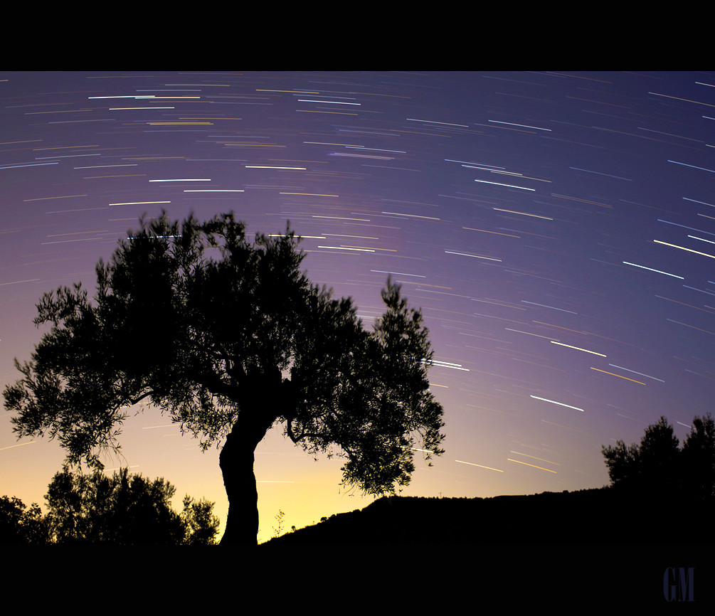 Starlight above olive tree.... | by Mgpixel