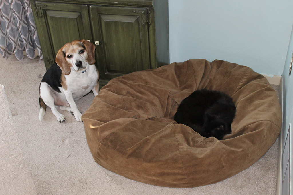 Beagle Bed And Breakfast