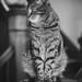 Hobie, Cat.