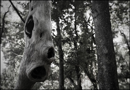 a face in the woods