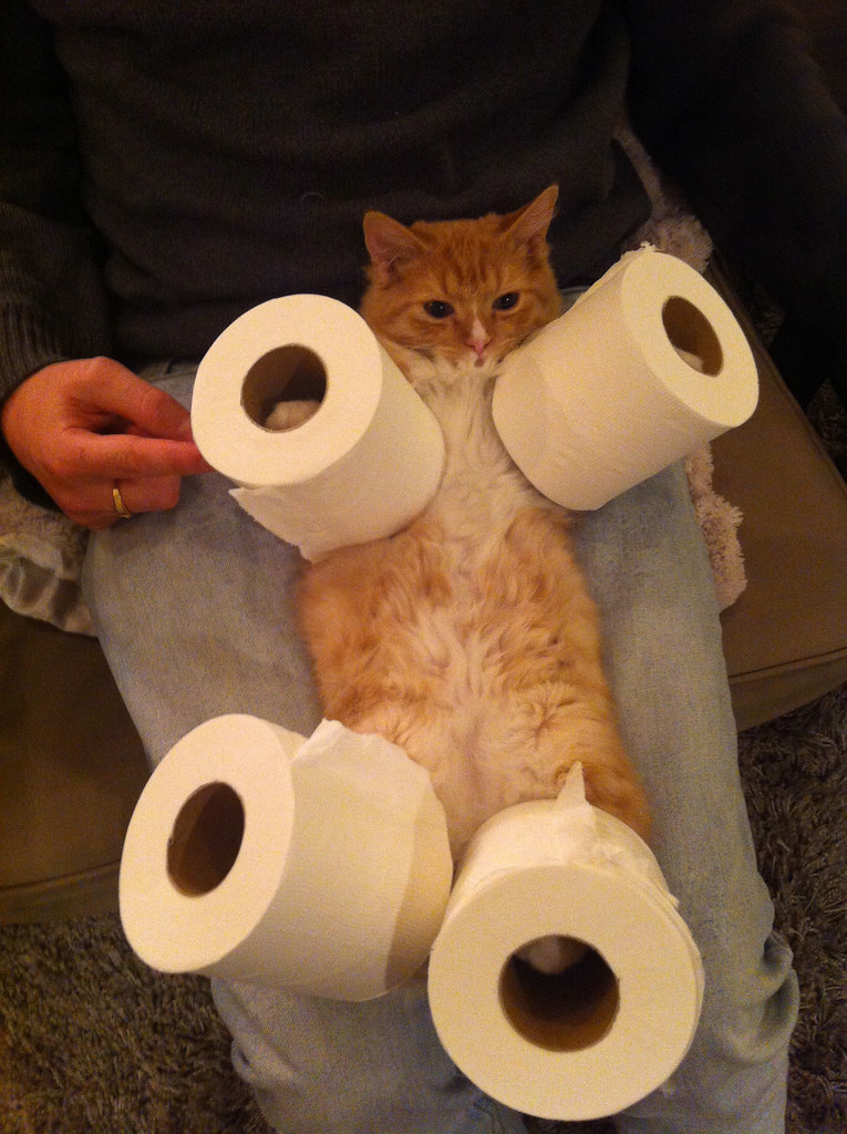 Cat Toilet Paper Holder Rasmus Zwickson Flickr
