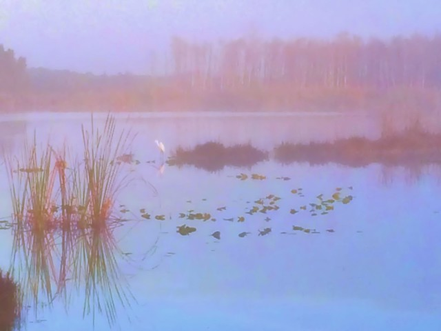Fog lifting PASTEL over Harbour Lake impoundment 20140224