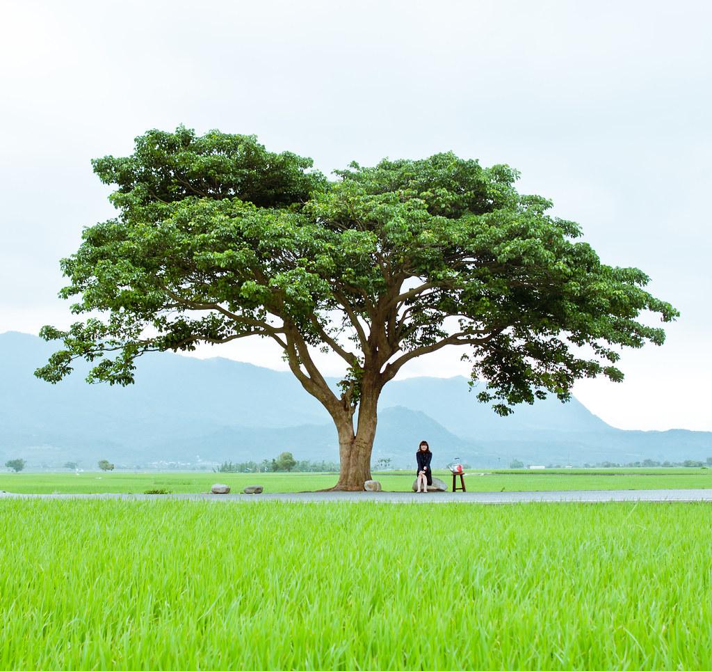 Green Mood。伯朗大道--金城武樹 | IPA 2014Non ... Eva Green