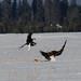 Eagle Fight 4