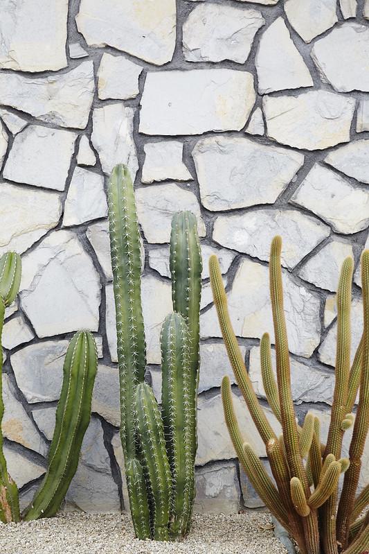 CA_Desert_0297