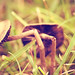 Magic Mushroom #2