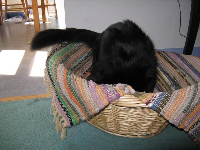 Black Cat Pound Azilda