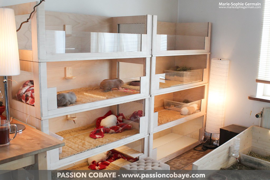My guinea pigs 39 habitat shelf with 8 modules big plaype for Diy playpen for guinea pigs
