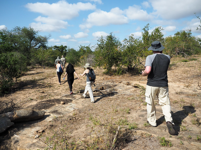 Walking safari in Kruger National Park